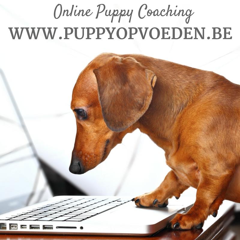 Puppy Opvoeden Logo